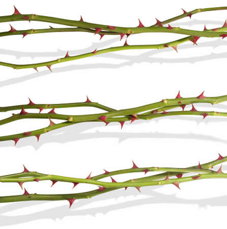 thorns  sharp: Isolated rose stems                        Stock Photo