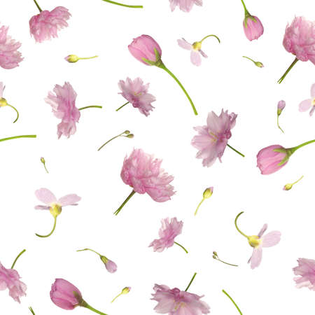 Repeatable background of pink flowers, isolated on white