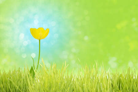 Yellow tulip on a complementary blue bokeh background, behind a grass foreground stripe, standing for cheerfulness.
