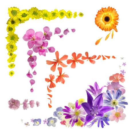 esquineros de flores: Colecci�n de las yemas florales aislados, para la decoraci�n de la esquina que se han fotografiado en la luz del estudio Foto de archivo