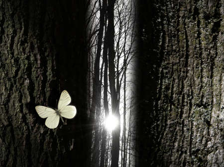 A sun beam is shining in a leafless forest, through a narrow gap of trees. A white butterfly gives the scene spirituality.