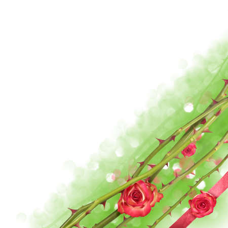 Corner of floating rose lines with rose buds and a red present ribbon over a bokeh background fading into white Stock Photo