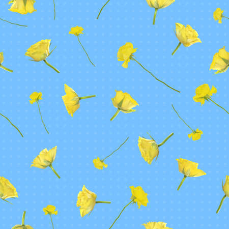 Repeatable background of flying yellow roses, photographed at studio light, and soft dots, isolated on blue Stock Photo