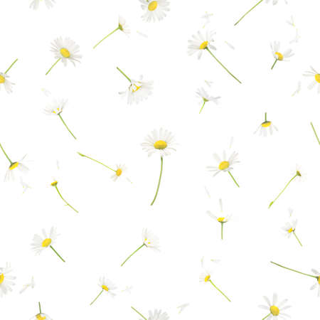Repeatable background of 22 different studio photographed, flying daisy flowers and petals, isolated on white