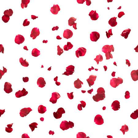 Répétable pétales de rose en rouge, studio photo avec la profondeur de champ, isolé sur blanc