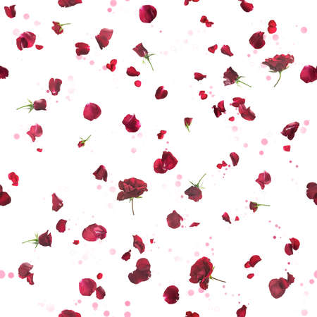 Repeatable flying, studio photographed roses with petals in dark red, on a back light, and bokeh particles, isolated on white