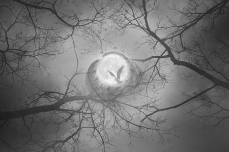 Mystic forest scene with a bird flying to a full moon, surrounded by a bird circle and feathers                     Stock Photo