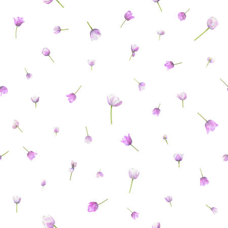 Repeatable, seamless flower background of 41 different tulip photographs of two similar specimen, in depth of field, isolated on white. Stockfoto