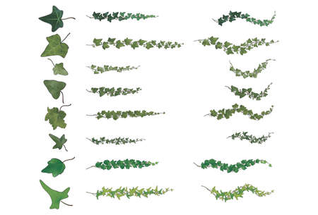 Ivy branches species collection, each with its own vein structure, in various original green tones in highlighted gradients and black outlines of 110 differently angled and separately drawn leaves