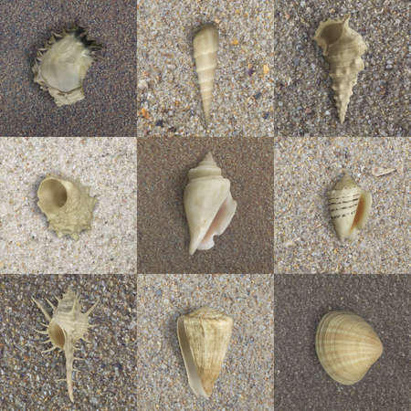 seashells in various forms
