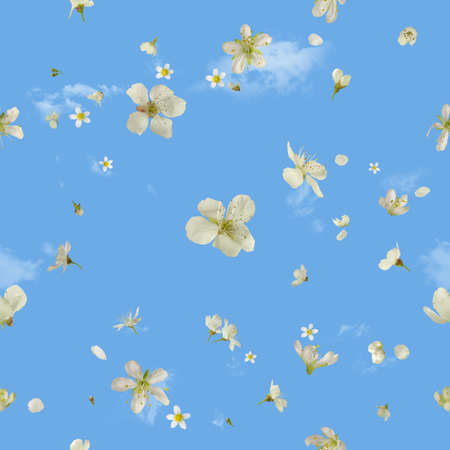 seamless flying white pear blossoms, studio photographed, in depth of field, isolated on absolute blue, with wispy clouds behind Stock Photo