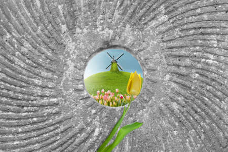 spring scene with a windmill on a hill by a tulip field, through the hole of a mill stone photo