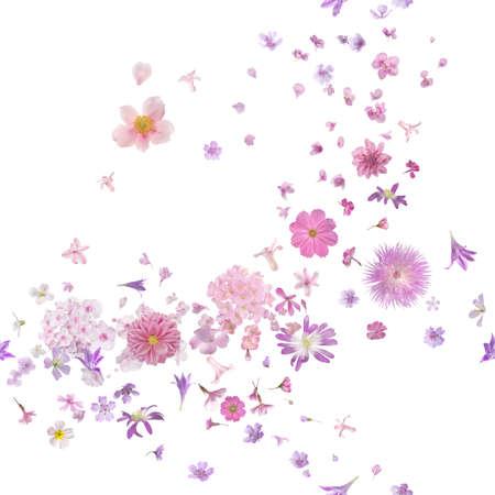 roze bloesem wind van veel verschillende vliegende bloemknoppen en bloemblaadjes, in de diepte van het veld, geïsoleerd op wit Stockfoto