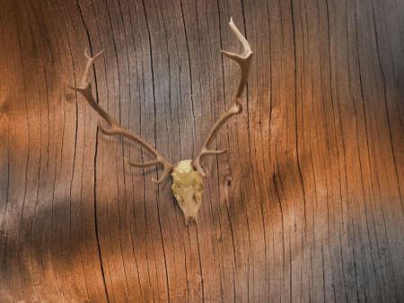 deer skull: lacquered deer skull on abstract tree bark lines in sepia tones