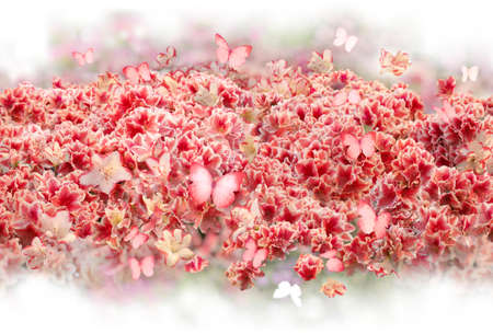 repeatable scattered bush of rhododendron flowers with similarly pink colored, flying butterflies, softly fading into absolute white