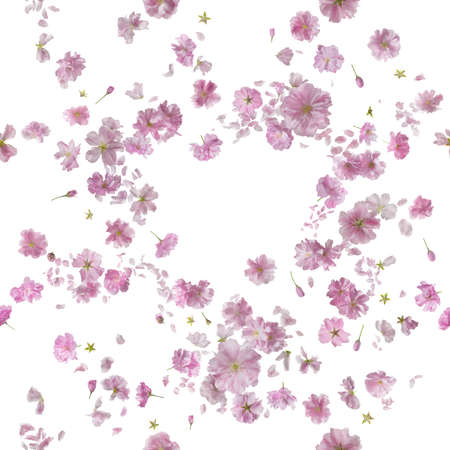repeatable floral breeze of 92 different ornamental sakura blossoms and petals, studio photographed and isolated on absolute white Stockfoto