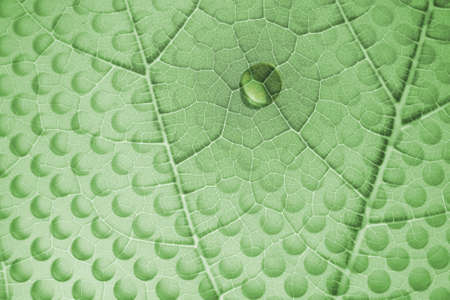 resemble: green leaf structure with a water drop and a layered glass plate with holes, in shadows, that resemble to drops