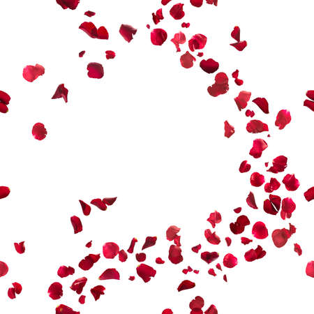 romantico: sin fisuras, p�talos de rosas rojas brisa, estudio de fotograf�a en la profundidad de campo, aislado en blanco Foto de archivo
