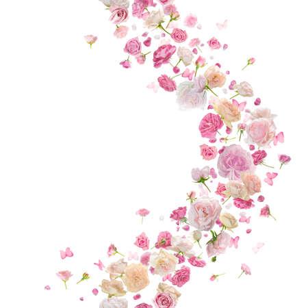 再現性のあるピンクのバラ、花びらと蝶風ガーランド、スタジオ撮影し、白で隔離