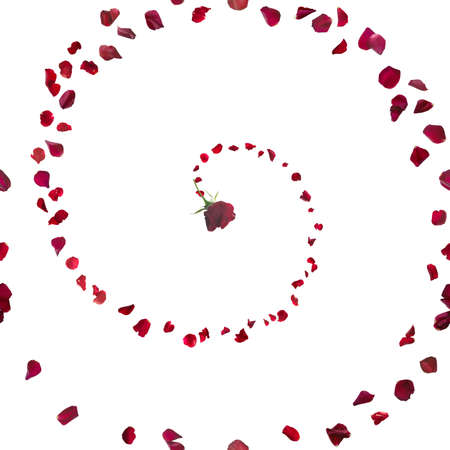 gravitation: red rose spiral with swirly floating petals repeatable and isolated on white