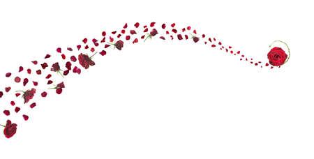rosas rojas: l�nea de brisa swirly de rosas rojas y p�talos con un bastoncillo de cerrado y abierto en la parte superior aislado en blanco absoluto