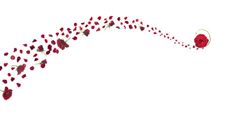 swirly line breeze of red roses and petals with a closed and open bud on the top isolated on absolute white Stockfoto