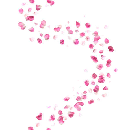 scent: pink rose petals breeze studio photographed with different color intensity vertically repeating and isolated on absolute white Stock Photo