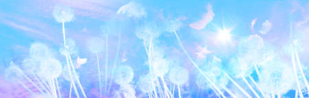 white dandelion field panorama with flying seeds feathers and birds nearby a sunrise in a double exposure effect