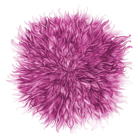 pencil drawn purple chrysanthemum flower bud with glitter isolated on white