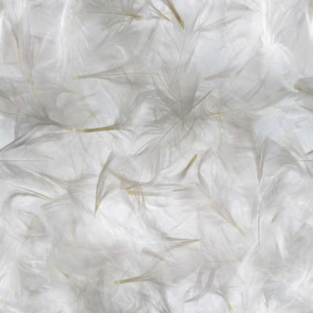 bird feathers: Seamless, white feathers pattern, studio photographed with a grey background