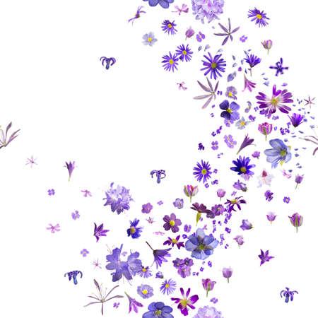 flores moradas: varios, los brotes de flor violeta brisa, con jacintos volar a las fronteras, repetibles y aisladas en blanco absoluto