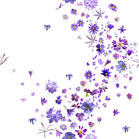tones: various, violet flower buds breeze, with hyacinths flying to the borders, repeatable and isolated on absolute white