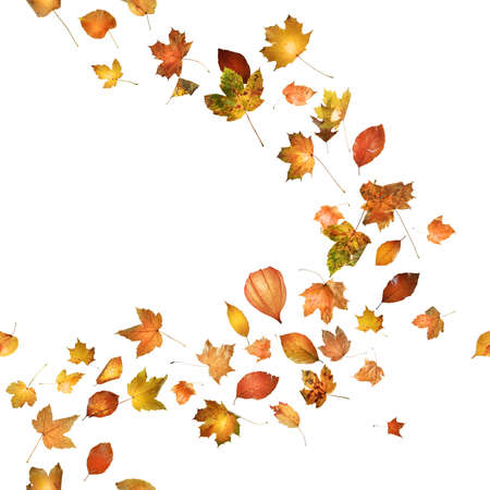 autumn leaves breeze curve, with a physalis bud, repeatable, studio photographed with a back glow and isolated on absolute white