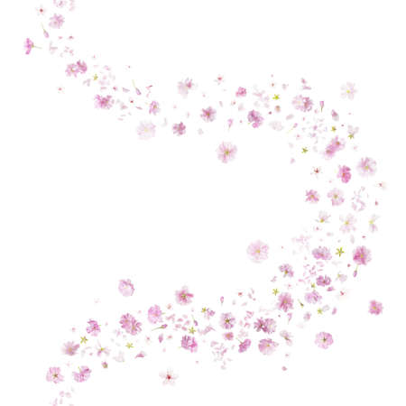 breeze: breeze curve of two different sakura blossoms, studio photographed, vertically repeating and isolated on absolute white Stock Photo