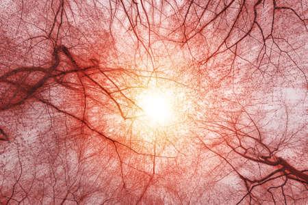autumn forest: la luce del sole bosco in autunno con le foglie rosse e raggi Archivio Fotografico