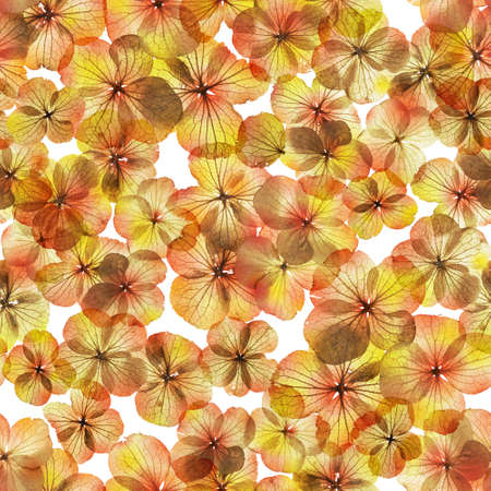 degrade: Seamless autumn, skeleton and transparent flower buds, with some seasonal color gradients