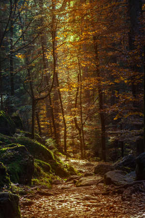 autumn path: autumn forest path with a vertical shining