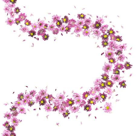 absolute: violet daisies and chrysanthemums flower buds pattern, studio photographed, vertically repeating and isolated on absolute white