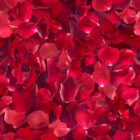 gradual: repeatable, red rose petals, each one studio photographed at different exposure to achieve gradual color shades depth