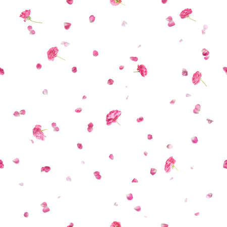 Repeating pink roses and petals, studio photographed and isolated on absolute white