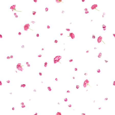 La repetición de rosas de color rosa y pétalos, estudio fotografiado y aislado en blanco absoluto Foto de archivo