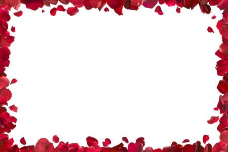 borde de flores: pétalos de cuadros, aislado rosa roja en el blanco absoluto, incluido el recorte camino