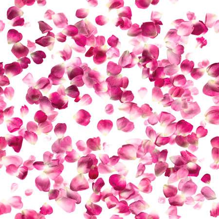 Wiederholen des Musters fotografiert von Studio, rose rosa Blüten, isoliert auf weiß absolut.