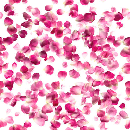 Repeating pattern of studio photographed, pink rose petals, isolated on white absolute.