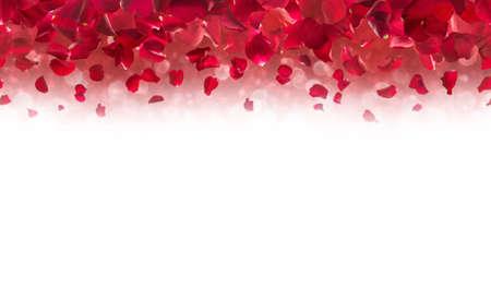 Pétalos de rosas rojas, cayendo desde arriba y fundido en blanco