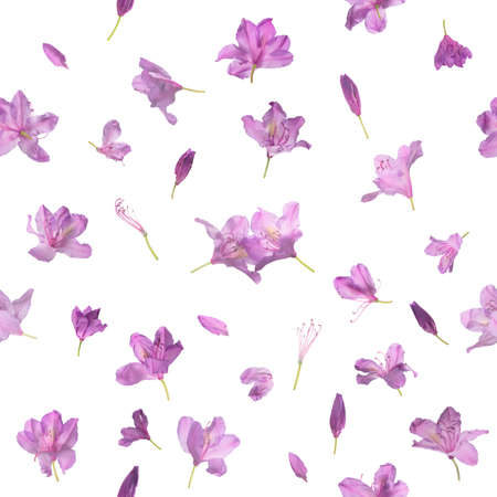 Repeating blossoming pink spring flowers pattern, with two of them meeting in the center, studio photographed and isolated on absolute white