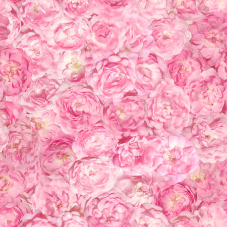 Repeatable pattern of over 40 different pink rose buds, each of them studio photographed seperately