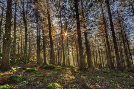 Sun light in the Simonswald in Autumn, in the Black Forest, Southwest Germany
