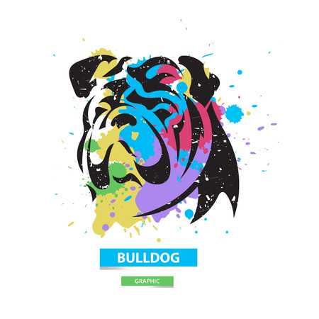 british bulldog: Artistic bulldog on the colorful blots background. Stylized graphic illustration. Vector wild animal.