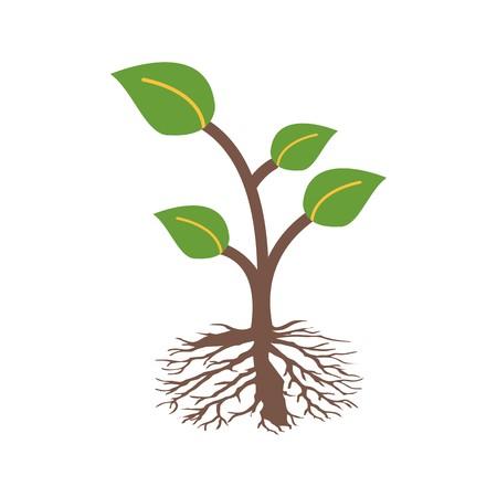 Icono de vector de raíz icono de signo ilustración vectorial para uso personal y comercial ... Icono de moda mirada limpia ...